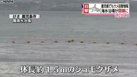 鹿児島 シュモクザメ