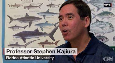 professor Stephen Kajiura