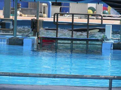 ティリクムが泳いだ