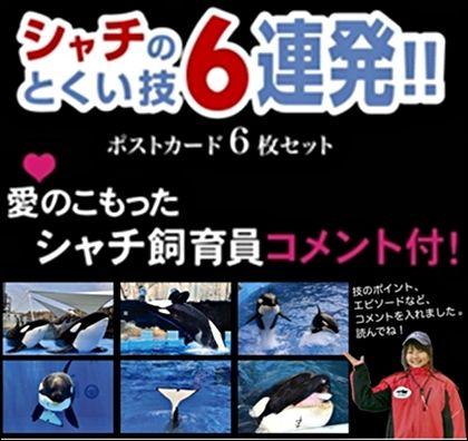 名古屋港水族館 シャチのポストカード