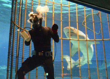 危険ザメの水槽を内側から掃除する飼育員