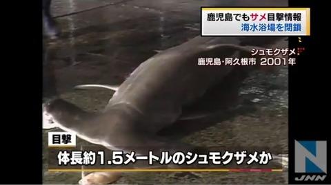 鹿児島の海水浴場、サメ目撃情報で閉鎖