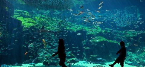 九十九島水族館「海きらら」