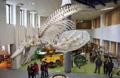 天井からつり下げた全長7メートルのシャチの骨格