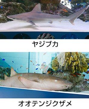 銀座 ソニー サメ
