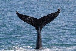方言 クジラ