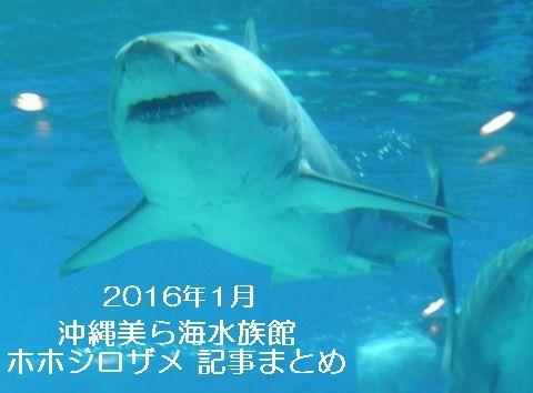 沖縄美ら海水族館 ホホジロザメ 記事まとめ