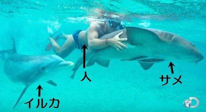 イルカ サメ 人間1