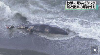 NHK クジラ