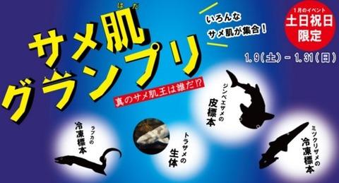 サメ肌グランプリ 上越市立水族博物館