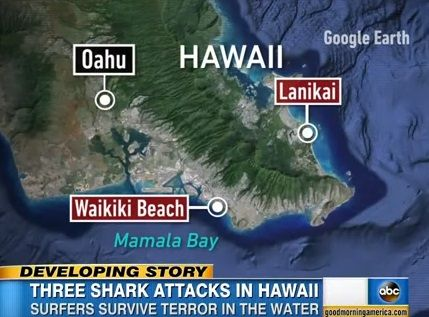 ハワイ サメ