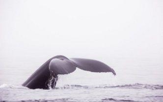 クジラ イメージ
