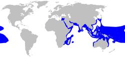 ツマグロ 分布図