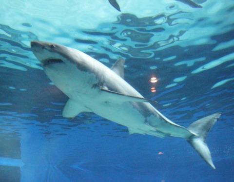 本部町の沖縄美ら海水族館