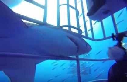 サメ ガーン