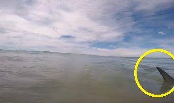 New Zealand サメ