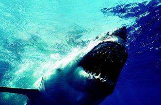 サメ イメージ24
