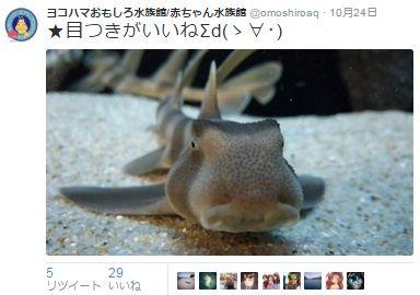 ヨコハマおもしろ水族館2
