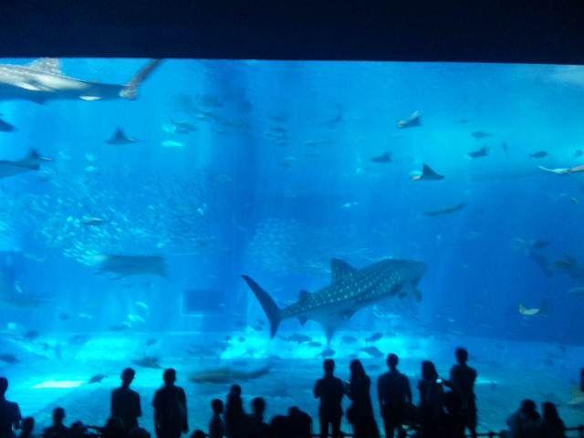 マンサクの水泳Blog