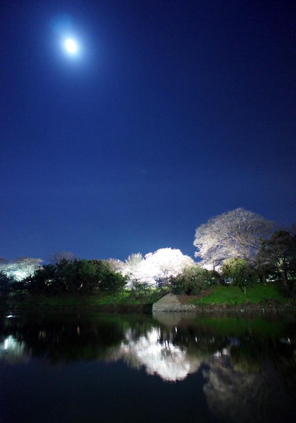 生まれて初めて舞鶴公園に行ってみた。