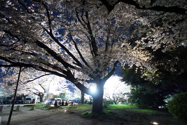 舞鶴公園2