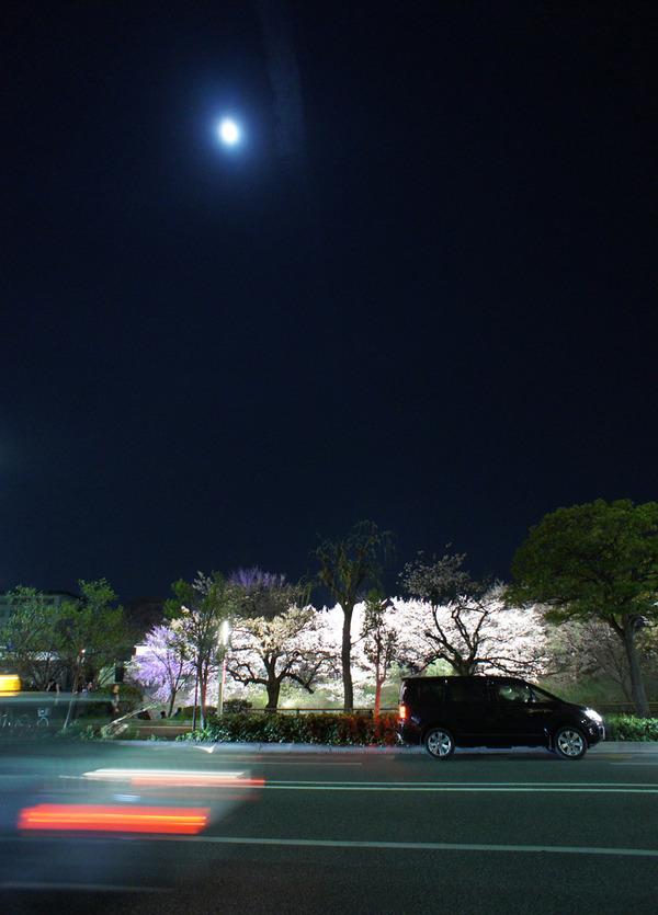 舞鶴公園4