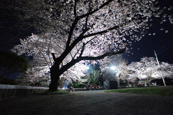 舞鶴公園6