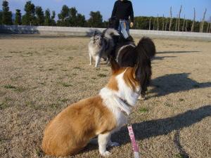 犬の学校♪