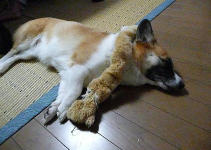お疲れ・・・