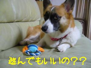 遊んでいいの?