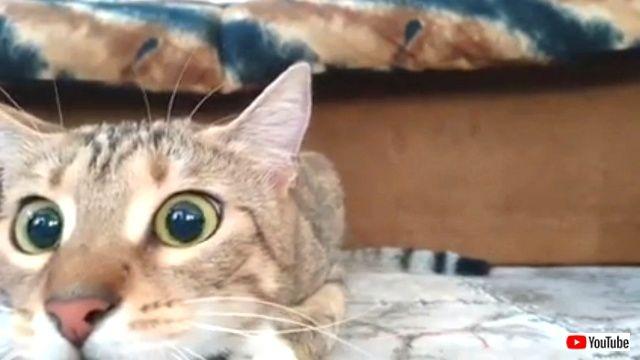 こっ怖い!でも画面から目を離せにゃい!猫のドキドキホラー映画鑑賞風景