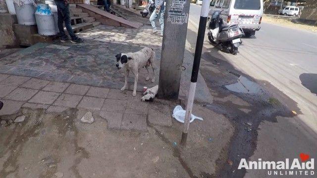 anguishedmotherdog1_e
