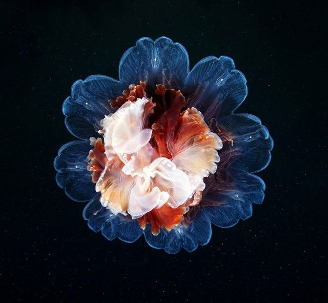 underwater-jellyfish-alexander-semenov-aquatis-66_e
