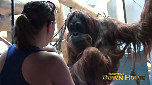 orangutanbaby2