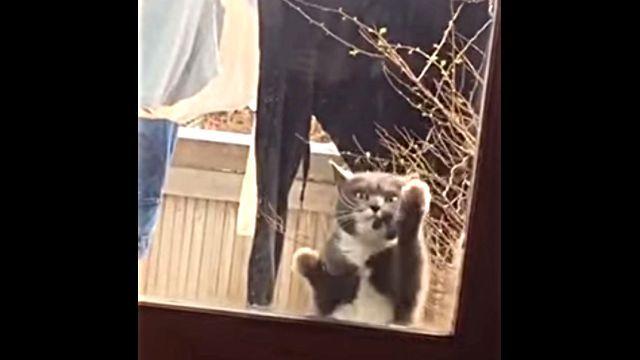 dancingcat3