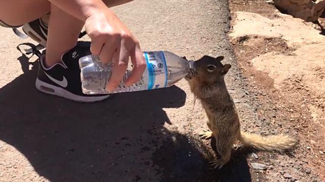 squirreldrinkingw3