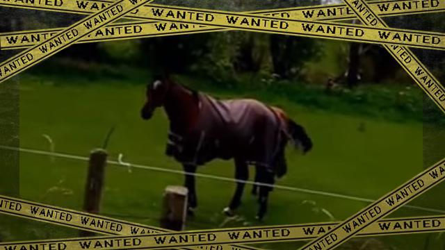 horse2ok-frame