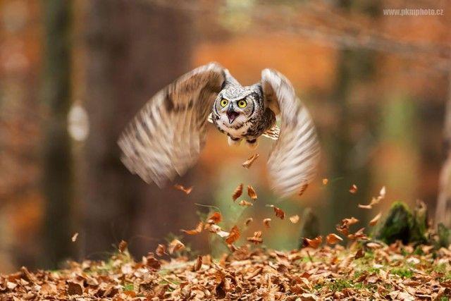 owl-photography-13__880_e