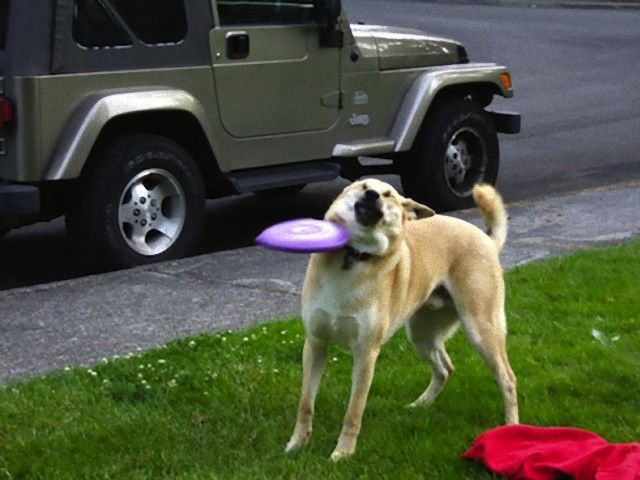 perfectly-timed-photos-dogs-3_e