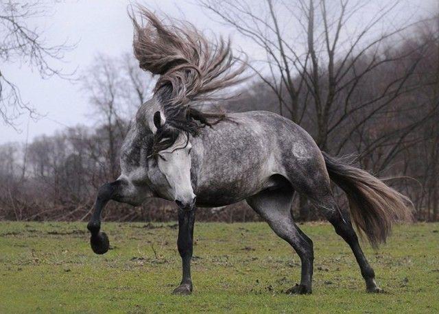 horse5_e