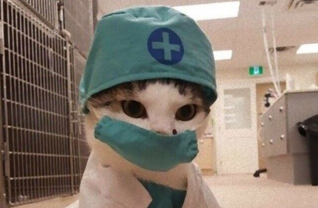 猫のいる職場はいかが?こんなスタッフがいたら絶対に通っちゃう!働く猫たち総集編