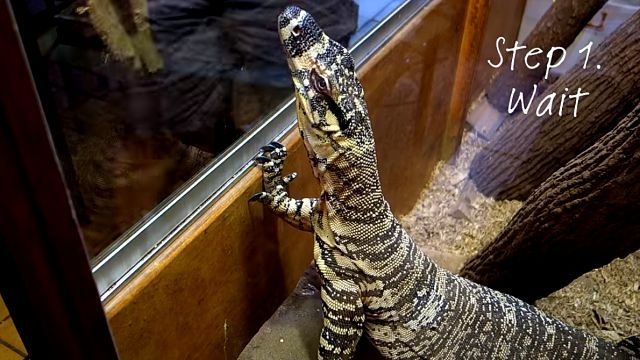 monitorlizard3