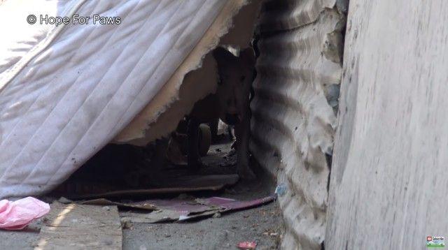 abandoneddogs4_e