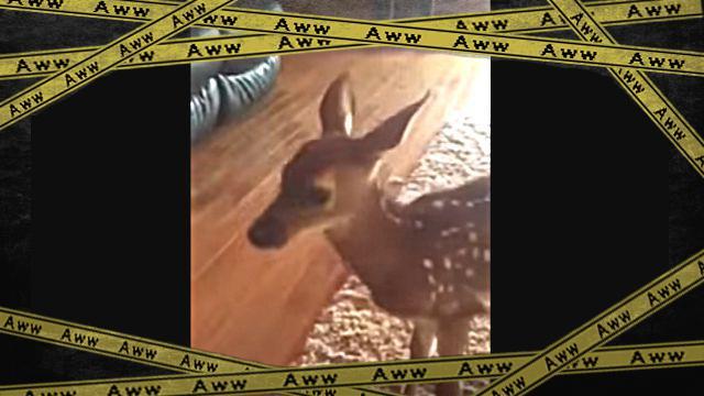 bambi1-frame