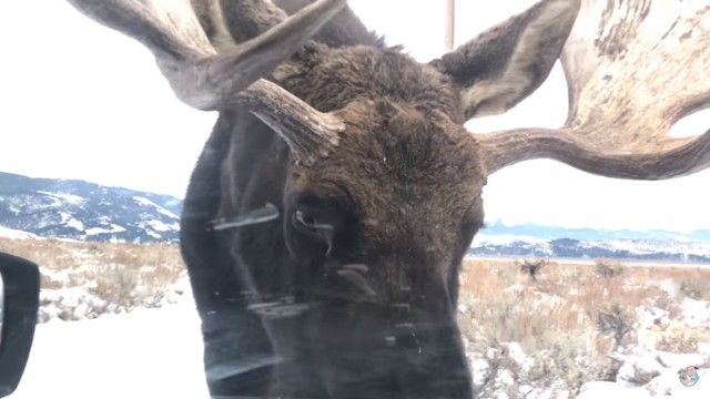 moose0_e