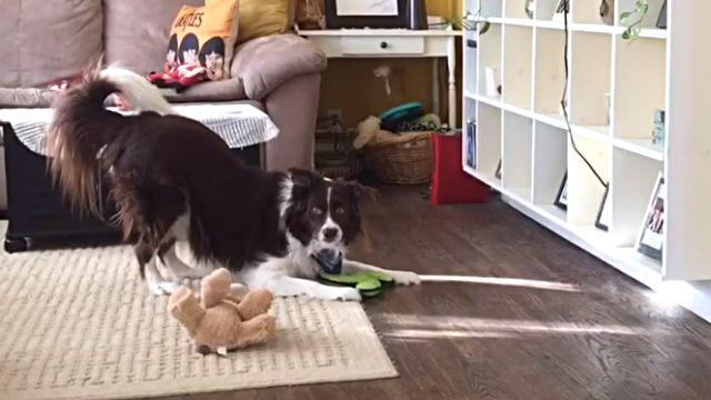 smartdog1