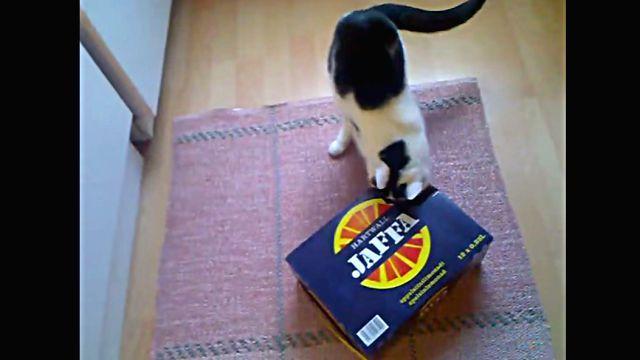 kittenbox1