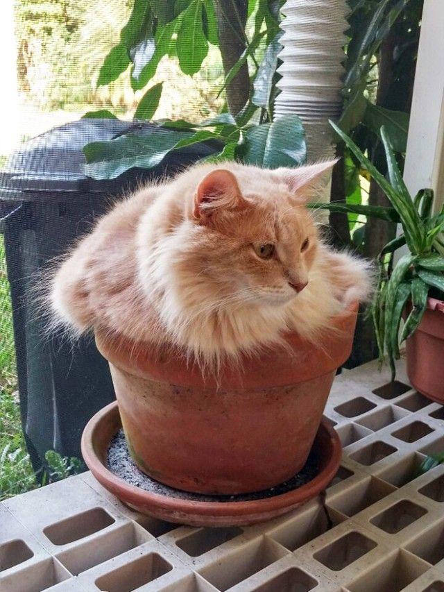 cat-plant16_e