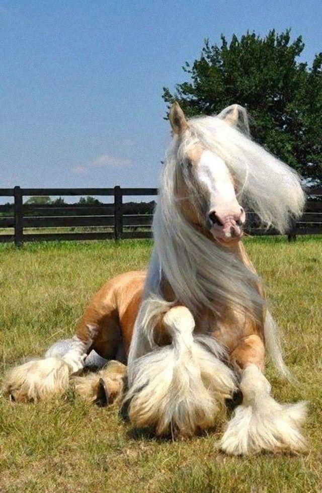 horse8_e