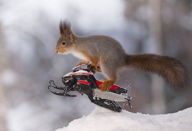 wintersportssquirrel2_e